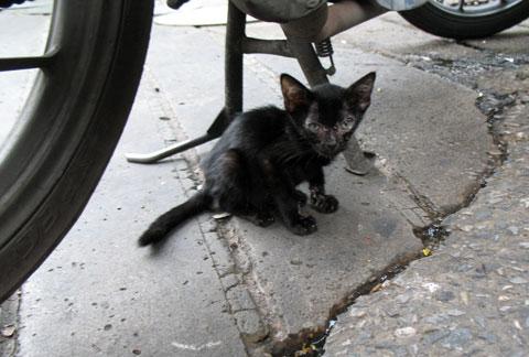 ホテル前の猫