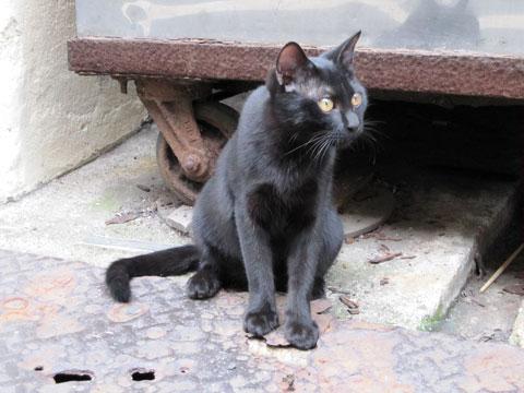 築地の黒猫