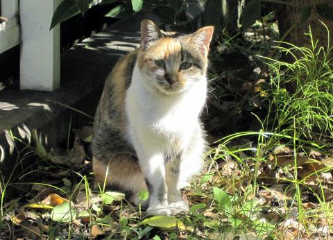 戸田市氷川町の猫