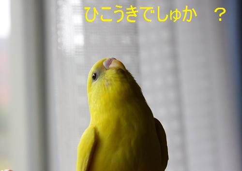 00DPP_8609.jpg
