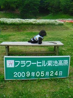 komugi 2034