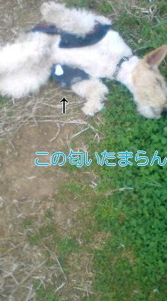 20080330213631.jpg