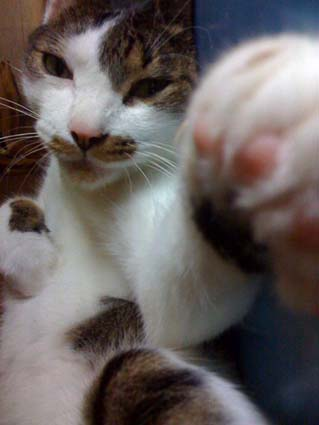 あつしの猫パンチ