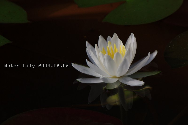 IMG71053.jpg