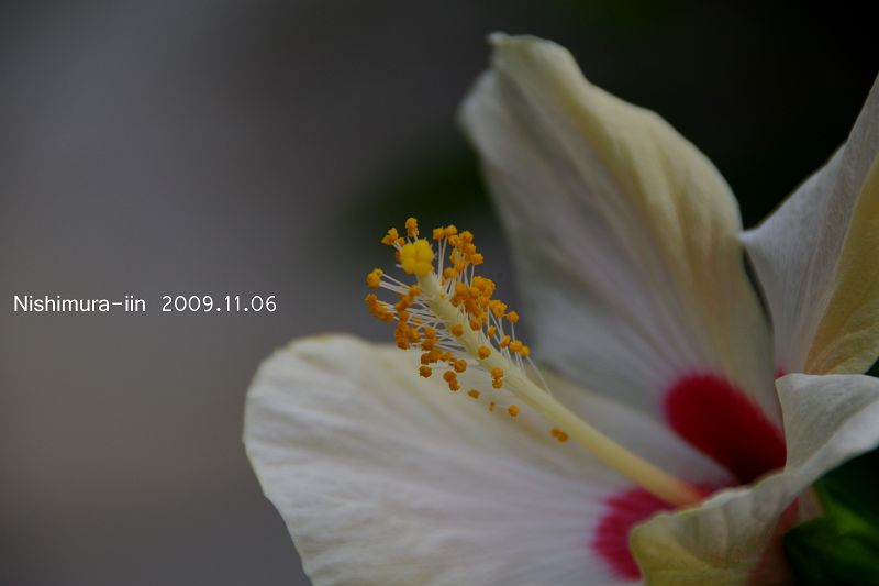 IMG73974_T.jpg