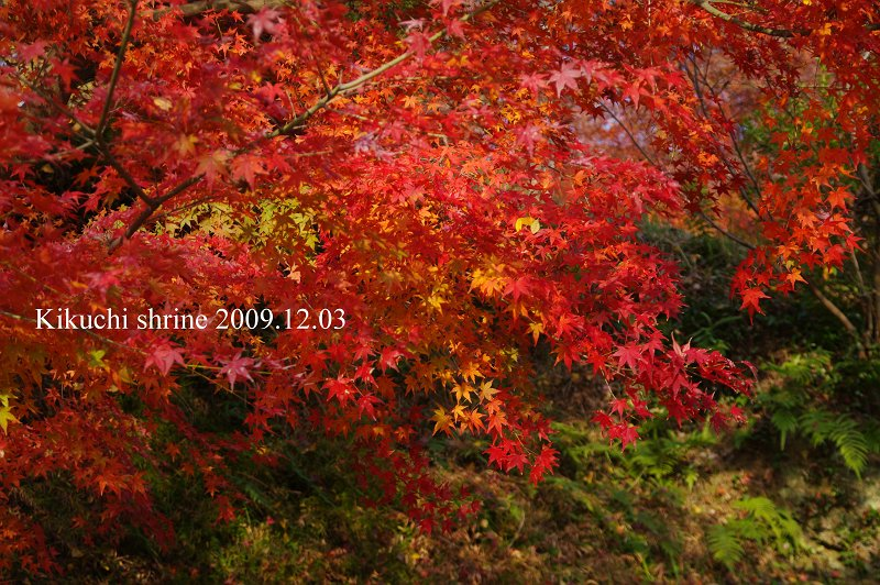 IMG75101-s.jpg