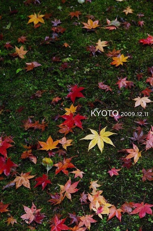 IMG75615-s.jpg