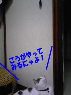 090723_10.jpg