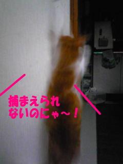 090723_13-1.jpg