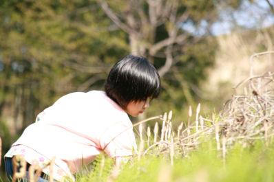 【花見】つくしつみ