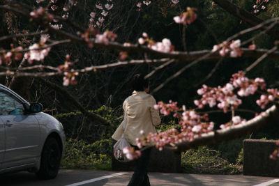 【花見】母ちゃん