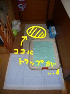 柚子トラップ
