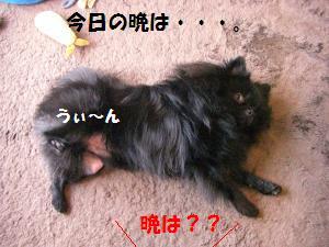 1014-3_convert_20081016202301.jpg