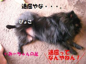 1014-4_convert_20081016202449.jpg