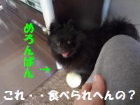 1017-20_convert_20081017125439.jpg