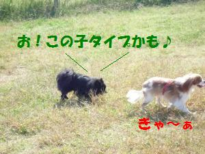 1019-1_convert_20081020203438.jpg