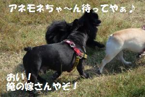 1019-8_convert_20081020204117.jpg