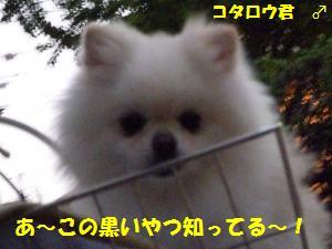 1025-3_convert_20081025204615.jpg