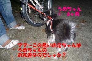 1025-4_convert_20081025204744.jpg
