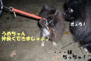 1025-5_convert_20081025204925.jpg