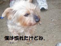 1028-4_convert_20081029003809.jpg
