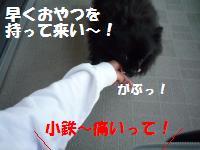 1029-11_convert_20081031155716.jpg