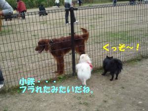 1102-15_convert_20081103144010.jpg