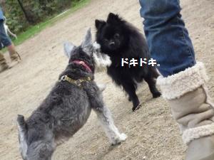 1102-31_convert_20081103144949.jpg