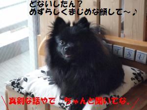 1107-3_convert_20081109150041.jpg