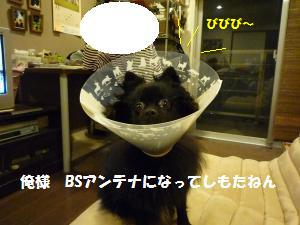 1108-11_convert_20081109150912.jpg