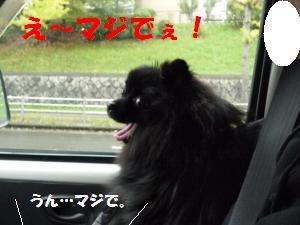 1108-7_convert_20081109150633.jpg