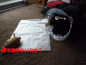 1109-14_convert_20081111200857.jpg