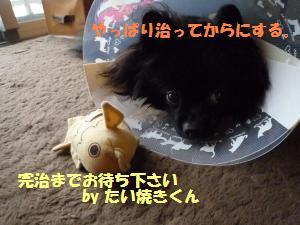 1109-15_convert_20081111200939.jpg