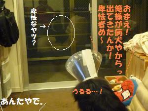 1109-21_convert_20081111201100.jpg