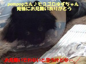 1109-5_convert_20081111200231.jpg