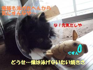 1109-7_convert_20081111200349.jpg