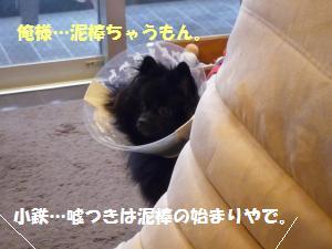 1110-7_convert_20081111201546.jpg