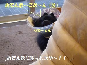1110-9_convert_20081111201643.jpg