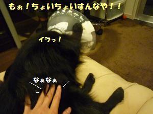 1118-13_convert_20081118224451.jpg