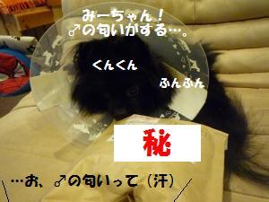1118-2_convert_20081118223845.jpg