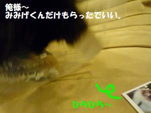 1118-4_convert_20081118224022.jpg
