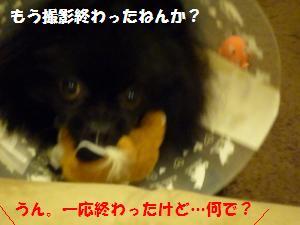 1118-8_convert_20081118224251.jpg
