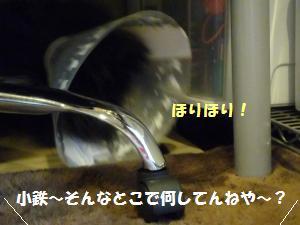 1121-11_convert_20081121210459.jpg
