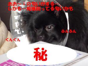 1121-1_convert_20081121205739.jpg
