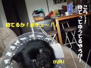1121-5_convert_20081121210021.jpg