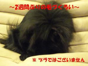 1122-4_convert_20081124133244.jpg