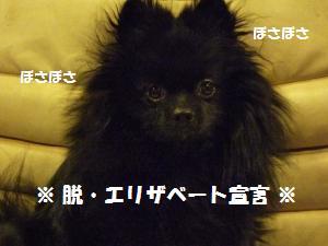 1122-5_convert_20081124133324.jpg