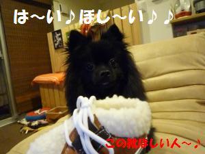 1126-2_convert_20081127030139.jpg