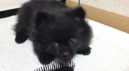 仔犬の小鉄-3