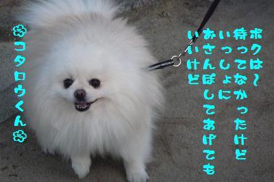 コタウメちゃんと散歩2